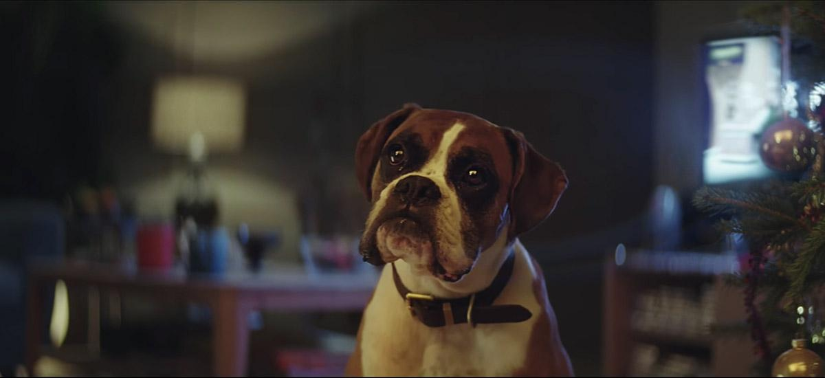 Boxer Dog in John Lewis Christmas 2016 Advert